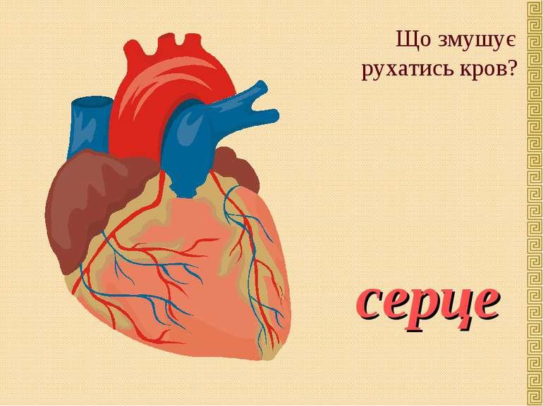 Що змушує рухатись кров? серце