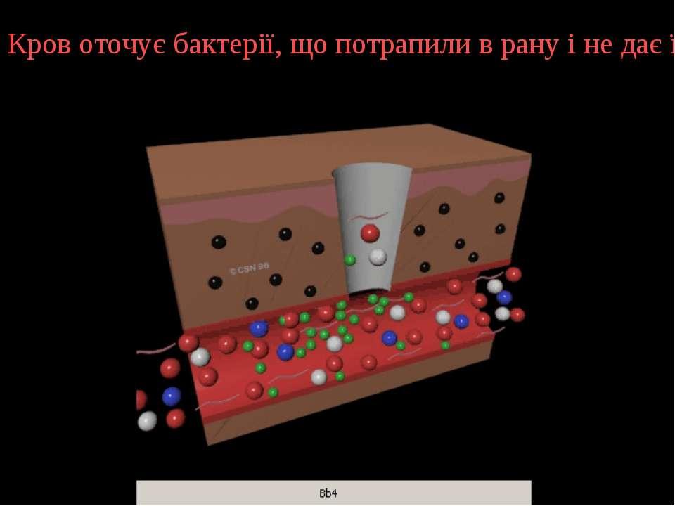 Кров оточує бактерії, що потрапили в рану і не дає їм проникнути вглиб органі...