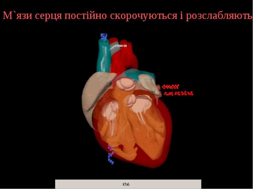 М`язи серця постійно скорочуються і розслабляються.