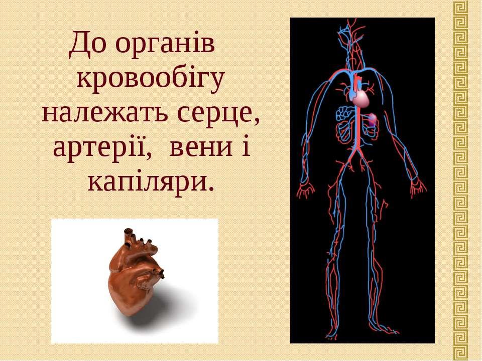 До органів кровообігу належать серце, артерії, вени і капіляри.