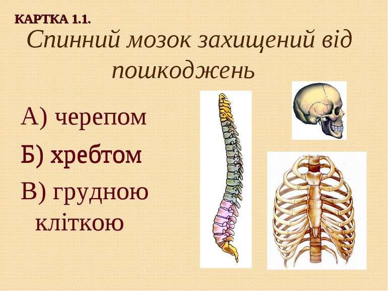 Спинний мозок захищений від пошкоджень А) черепом Б) хребтом В) грудною клітк...