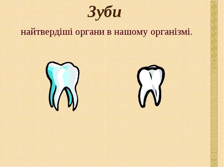 Зуби найтвердіші органи в нашому організмі.