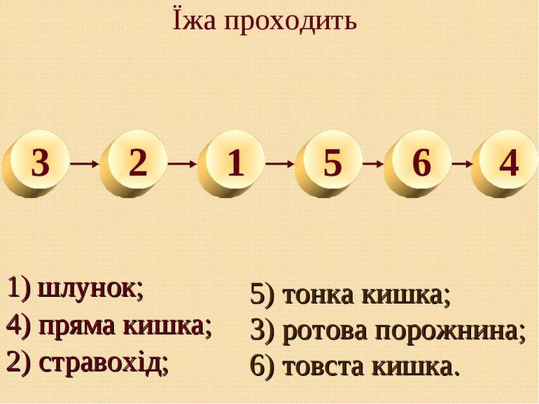 шлунок; 4) пряма кишка; 2) стравохід; Їжа проходить 5) тонка кишка; 3) ротова...