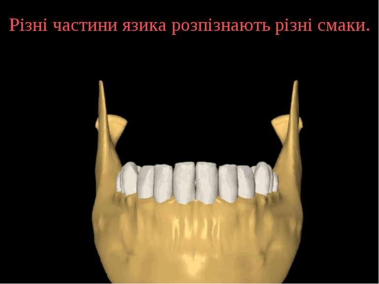 Різні частини язика розпізнають різні смаки.