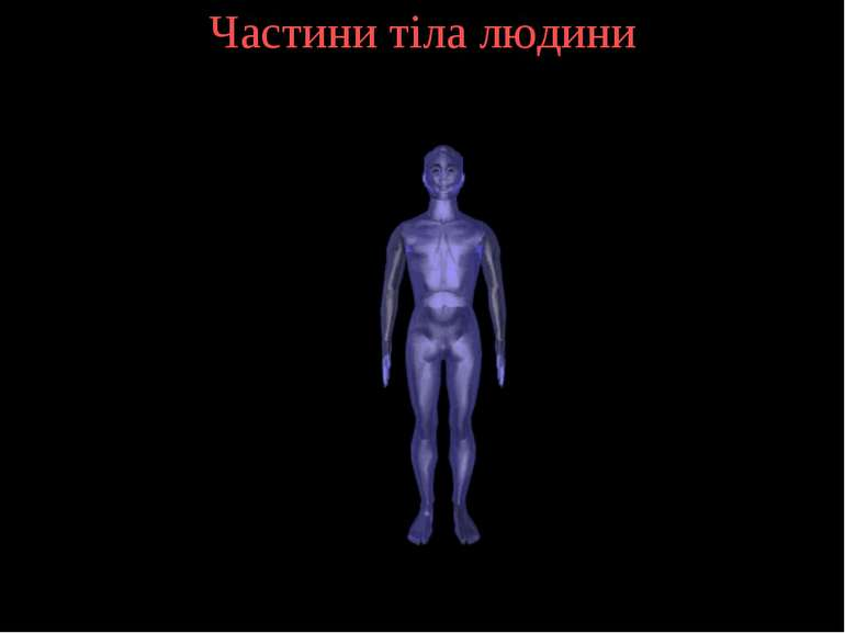 Частини тіла людини