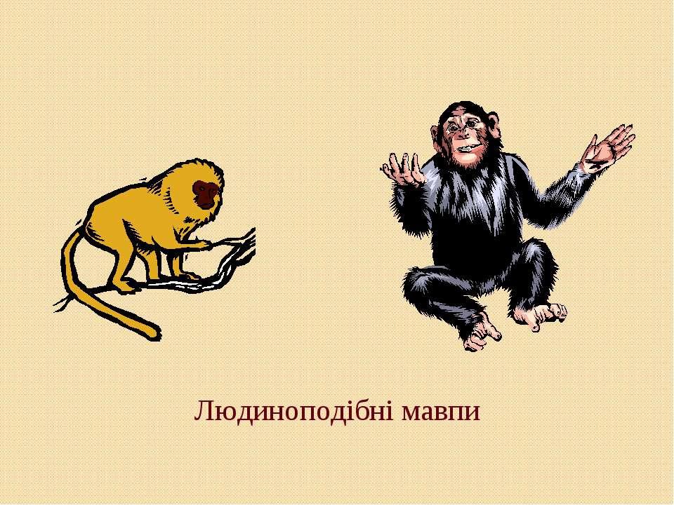 Людиноподібні мавпи
