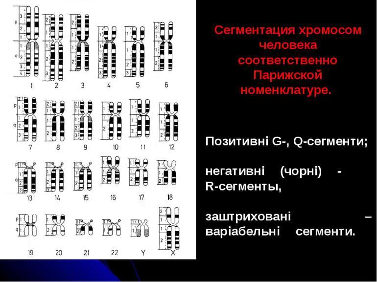 Позитивні G-, Q-сегменти; негативні (чорні) - R-сегменты, заштриховані – варі...