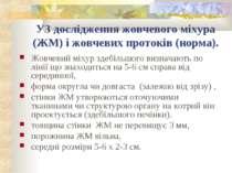 УЗ дослідження жовчевого міхура (ЖМ) і жовчевих протоків (норма). Жовчевий мі...