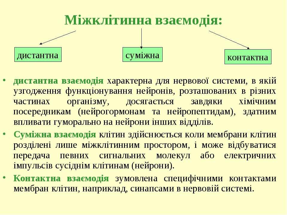 Міжклітинна взаємодія: дистантна взаємодія характерна для нервової системи, в...