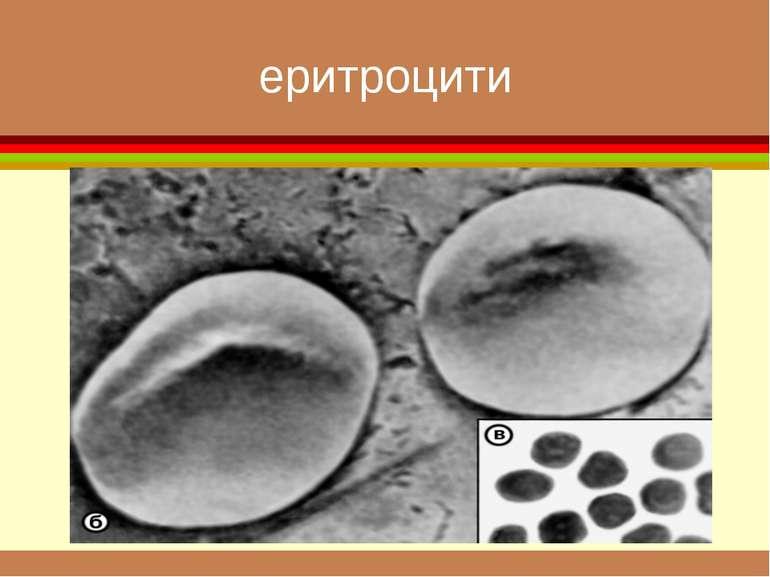 еритроцити