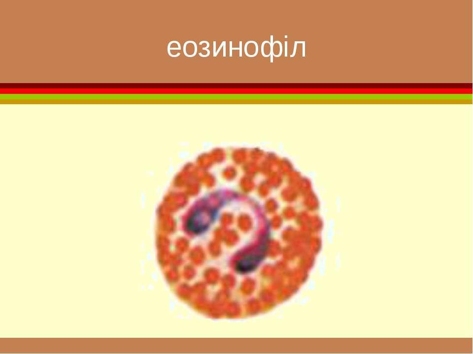 еозинофіл