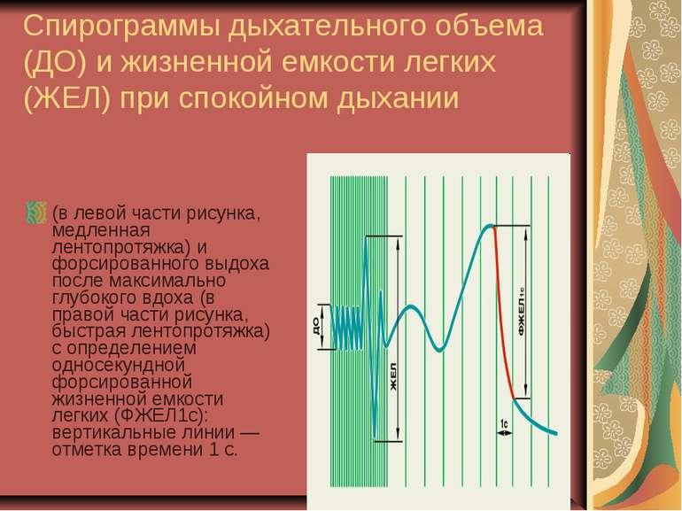 Спирограммы дыхательного объема (ДО) и жизненной емкости легких (ЖЕЛ) при спо...