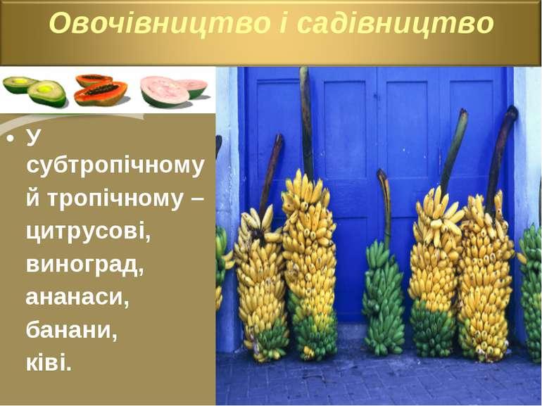 У субтропічному й тропічному – цитрусові, виноград, ананаси, банани, ківі.