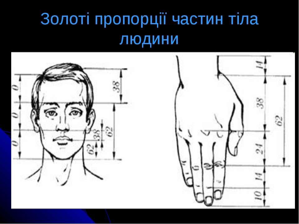 Золоті пропорції частин тіла людини
