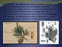 Голонасінні - це найдавніша група існуючих сьогодні рослин, які розмножуються...
