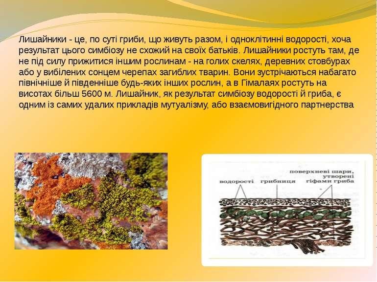 Лишайники - це, по суті гриби, що живуть разом, і одноклітинні водорості, хоч...