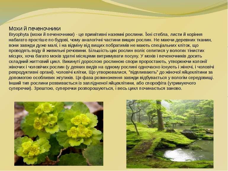 Мохи й печеночники Bryophyta (мохи й печеночники) - це примітивні наземні рос...