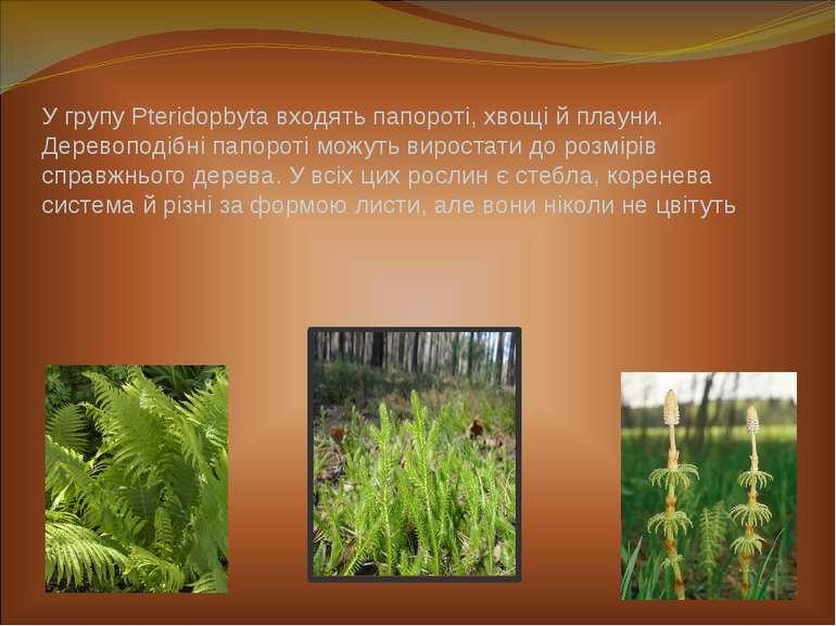 У групу Pteridopbyta входять папороті, хвощі й плауни. Деревоподібні папороті...