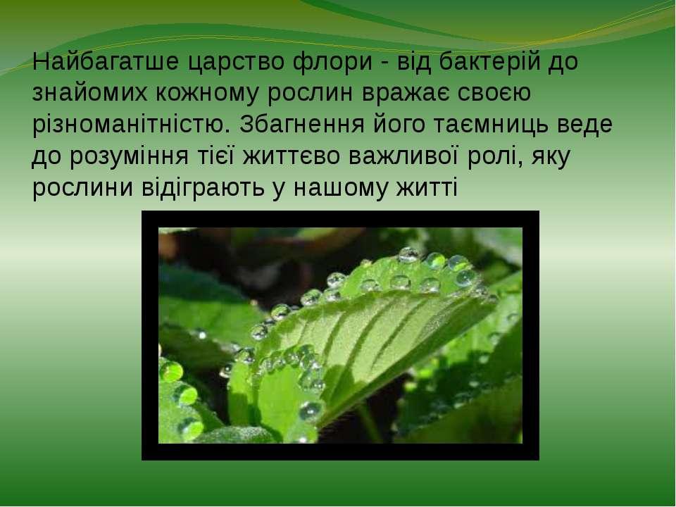 Найбагатше царство флори - від бактерій до знайомих кожному рослин вражає сво...