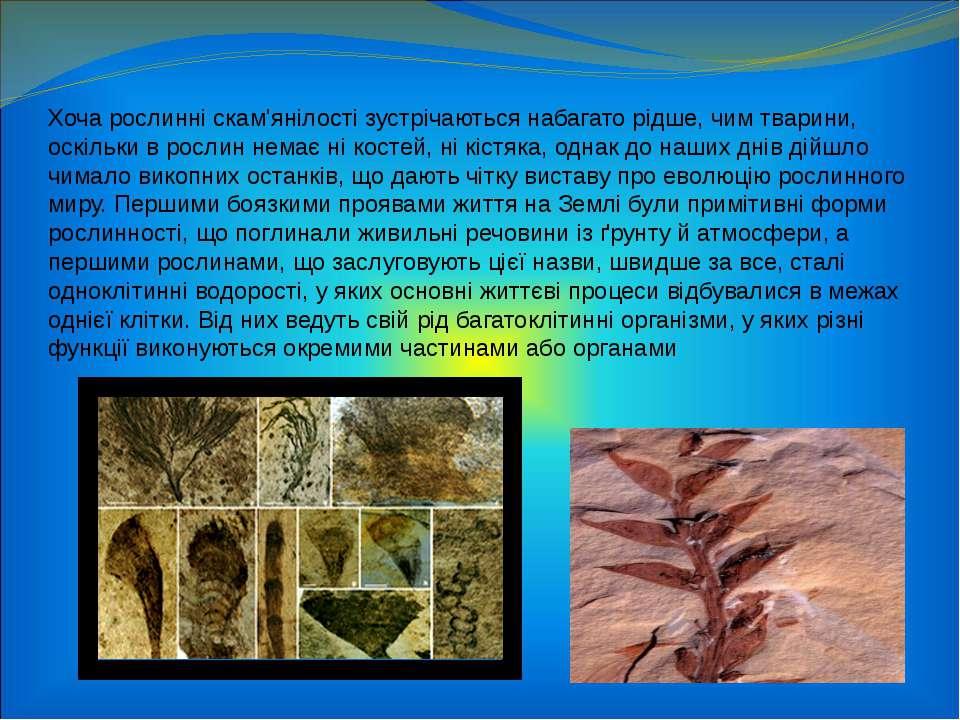 Хоча рослинні скам'янілості зустрічаються набагато рідше, чим тварини, оскіль...