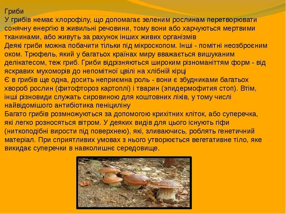Гриби У грибів немає хлорофілу, що допомагає зеленим рослинам перетворювати с...