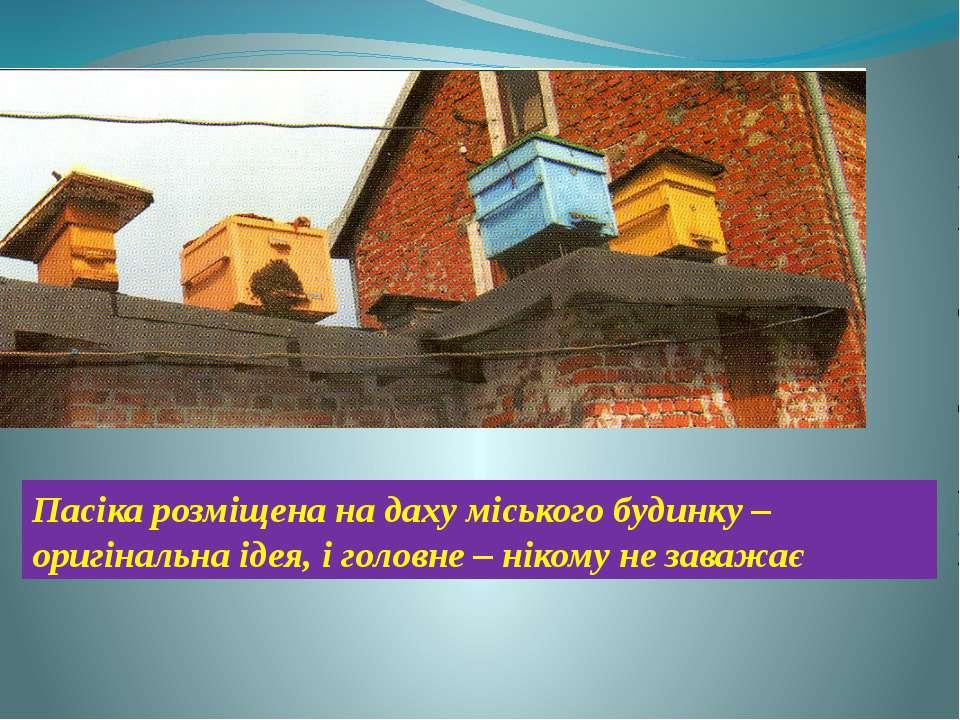 Пасіка розміщена на даху міського будинку – оригінальна ідея, і головне – нік...
