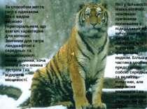 За способом життя тигр є одинаком. Він є видом виразно територіальним, що вза...