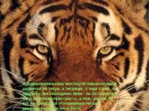 У давньоримському мистецтві змальовували зазвичай не тигра, а тигрицю. У парі...