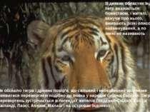 Не обійшло тигра і древнє повір'я, що сильний і небезпечний звір може виявити...