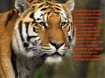 Тигри мають добре розвинений нічний зір, а за деякими даними, їм частково при...