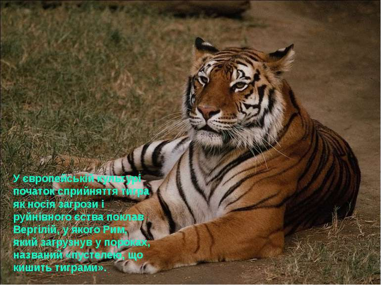 У європейській культурі початок сприйняття тигра як носія загрози і руйнівног...