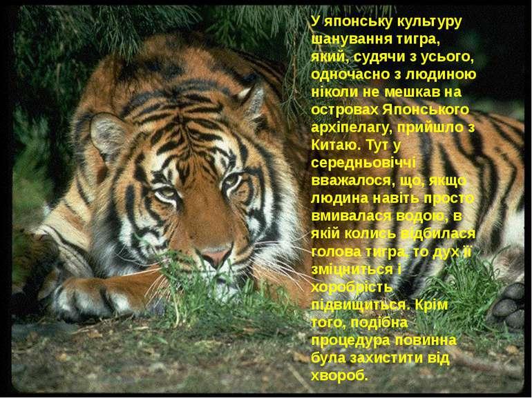 У японську культуру шанування тигра, який, судячи з усього, одночасно з людин...