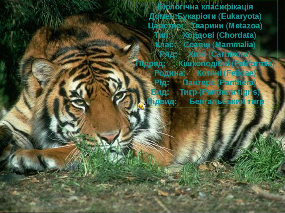Біологічна класифікація Домен: Еукаріоти (Eukaryota) Царство: Тварини (Metazo...