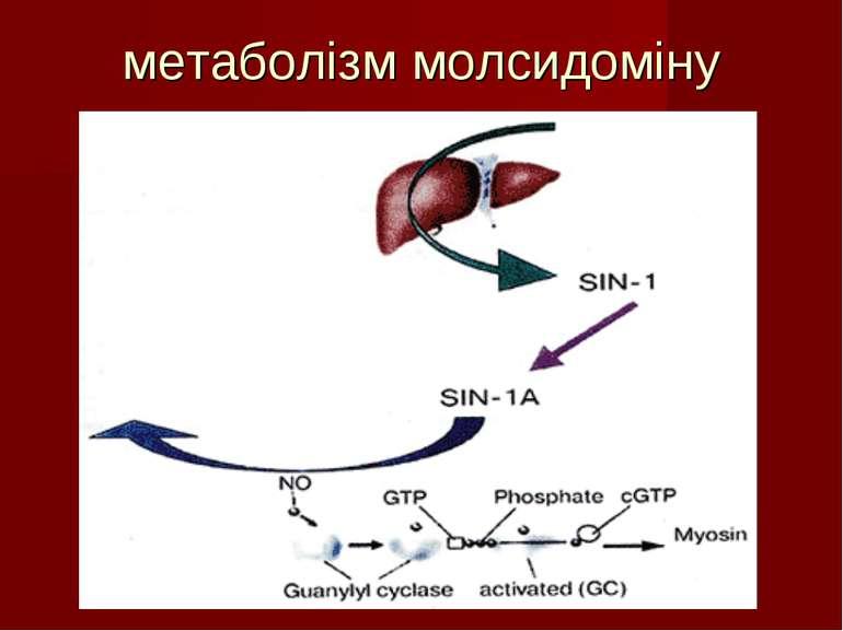 метаболізм молсидоміну