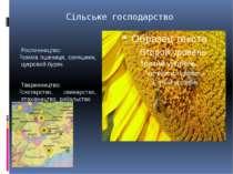 Сільське господарство Рослинництво: озима пшениця, соняшник, цукровий буряк. ...