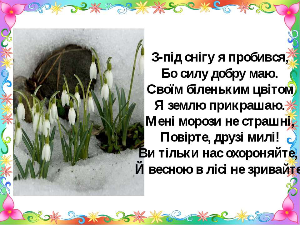 З-під снігу я пробився, Бо силу добру маю. Своїм біленьким цвітом Я землю при...