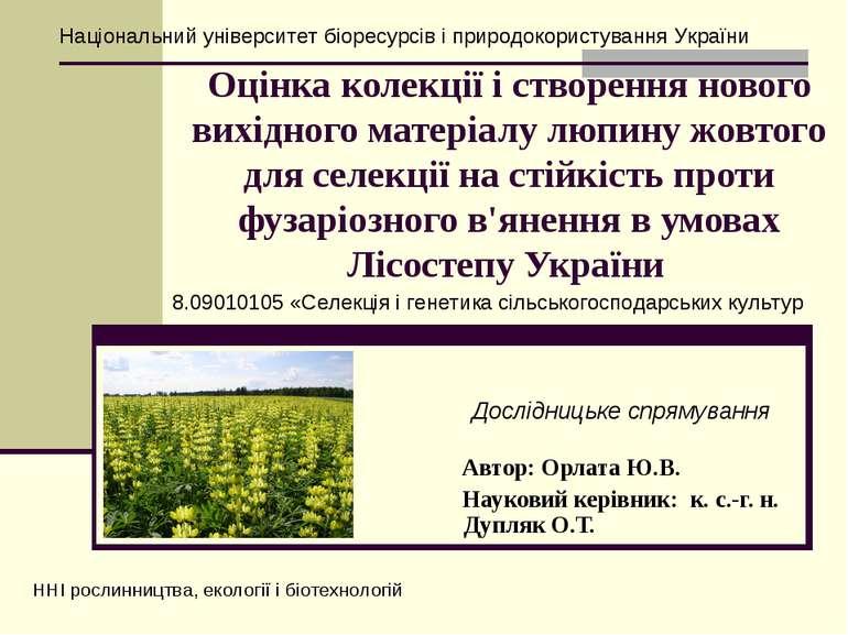 Оцінка колeкції і cтворeння нового вихідного матeріалу люпину жовтого для ceл...