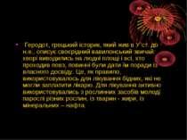 Геродот, грецький iсторик, який жив в У ст. до н.е., описує своєрiдний вавило...