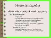 Філогенія мікробів Філогенія домену Bacteria (продовж.) Тип Spirochaetes Спір...