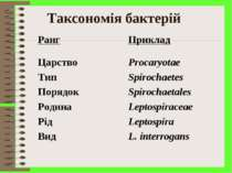 Таксономія бактерій Ранг Приклад Царство Procaryotae Тип Spirochaetеs Порядок...