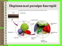 Порівняльні розміри бактерій