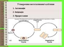 Утворення вегетативної клітини Активація Ініціація Проростання