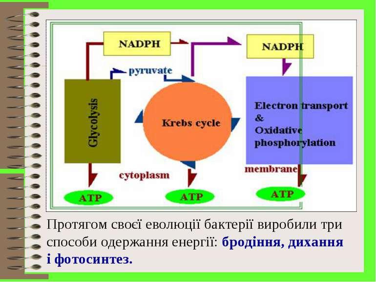 Протягом своєї еволюції бактерії виробили три способи одержання енергії: брод...