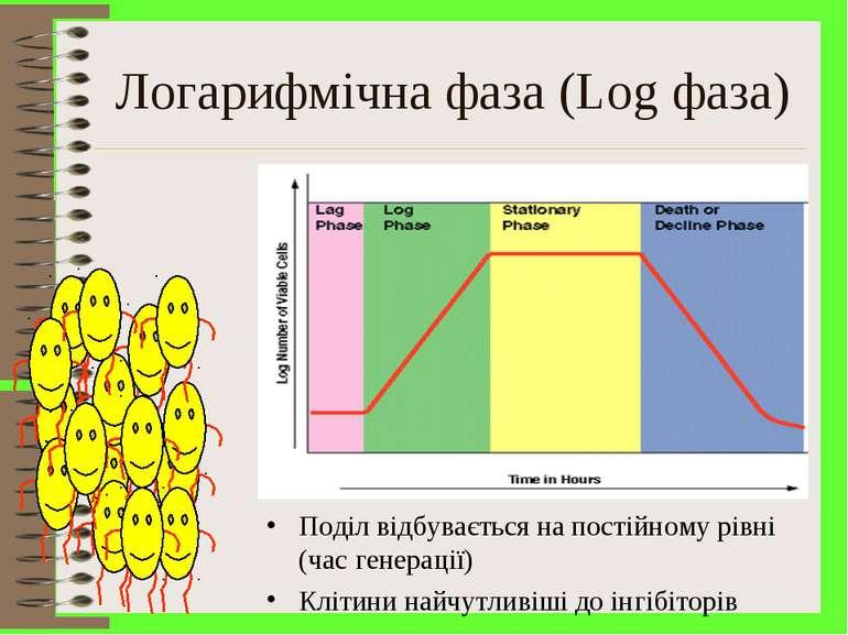 Логарифмічна фаза (Log фаза) Поділ відбувається на постійному рівні (час гене...