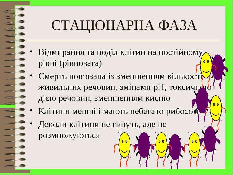 СТАЦІОНАРНА ФАЗА Відмирання та поділ клітин на постійному рівні (рівновага) С...