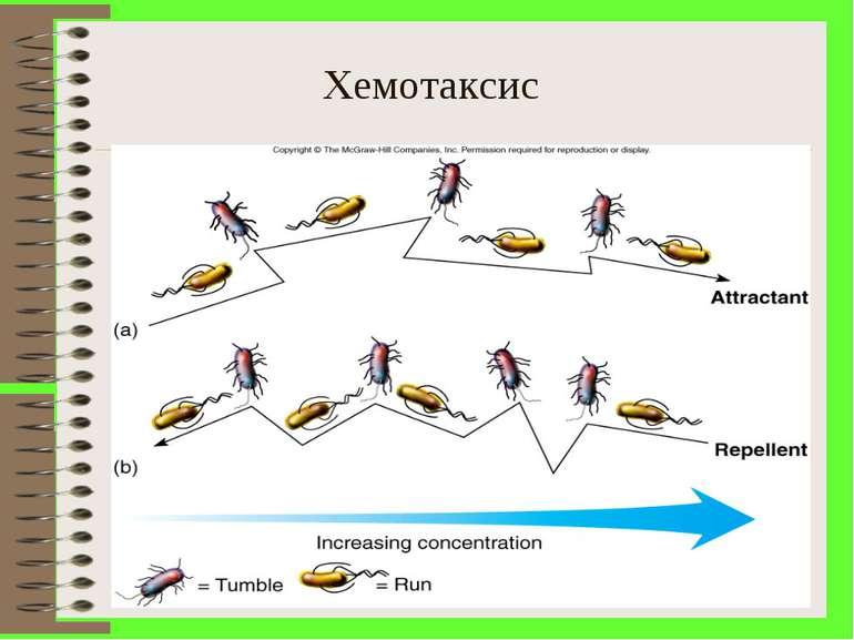 Хемотаксис