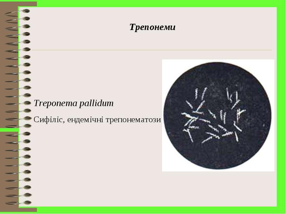 Трепонеми Treponema pallidum Сифіліс, ендемічні трепонематози