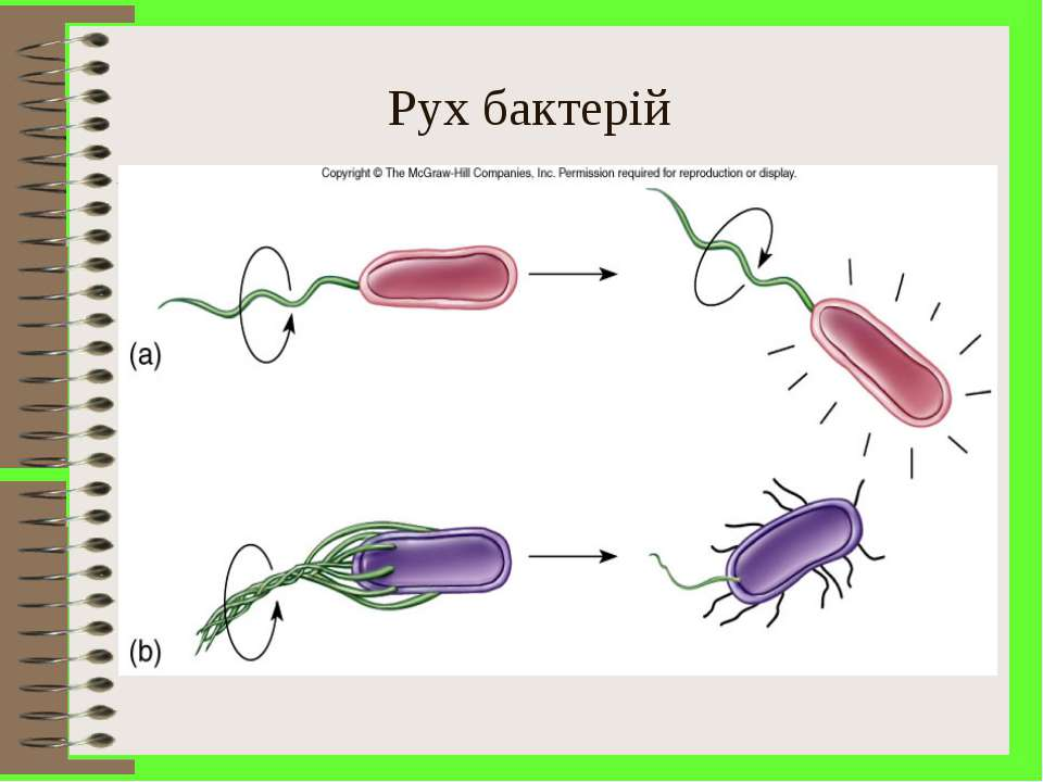 Рух бактерій