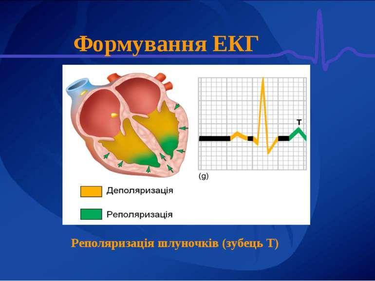 Формування ЕКГ Реполяризація шлуночків (зубець Т)