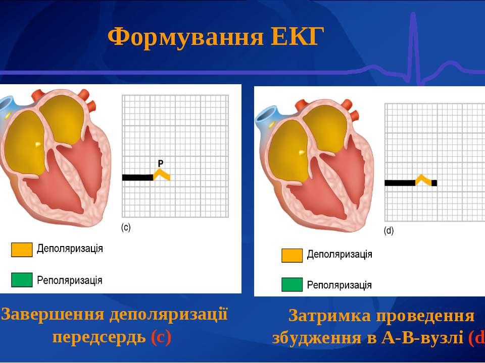 Формування ЕКГ Завершення деполяризації передсердь (с) Затримка проведення зб...